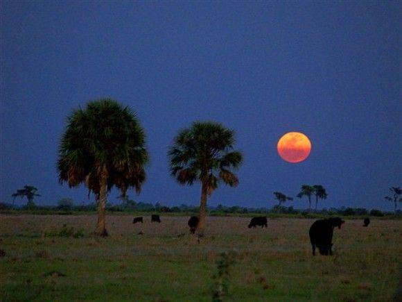 Der Super-Vollmond vom 19. März 2011 über Parrish, Florida (USA), Foto: Tom Connor
