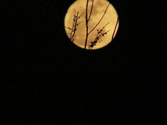 Der Super-Vollmond vom 19. März 2011 über Basset, Virginia (USA), Foto: Essie Hollandswort