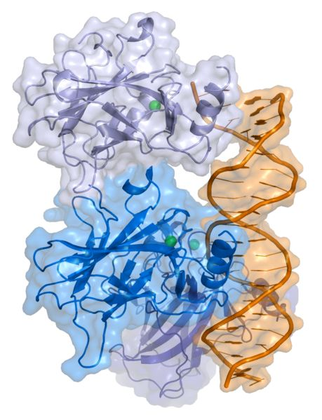 Protein Krebs