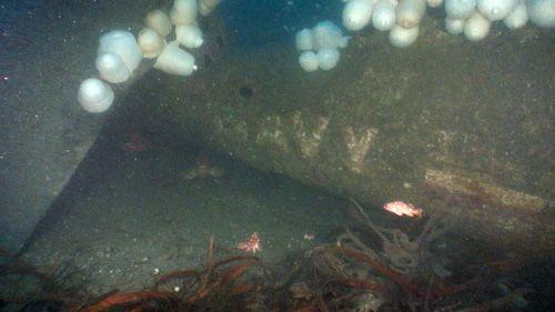 Wrack des 1945 verschwundenen Avenger-Bombers (ub88.org)