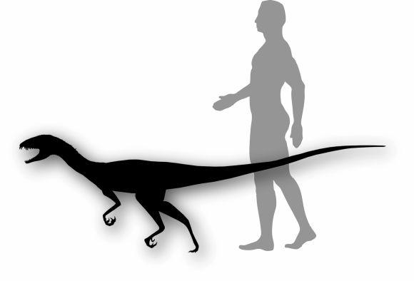 Größenvergleich der neuen Spezies mit einem Menschen. Sie hatte die Ausmaße eines großen Hundes. (Smithsonian Institution)