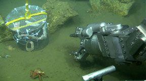 Einer der ferngesteuerten Roboter und ein Metallkäfig ((c) 2010 MBARI)
