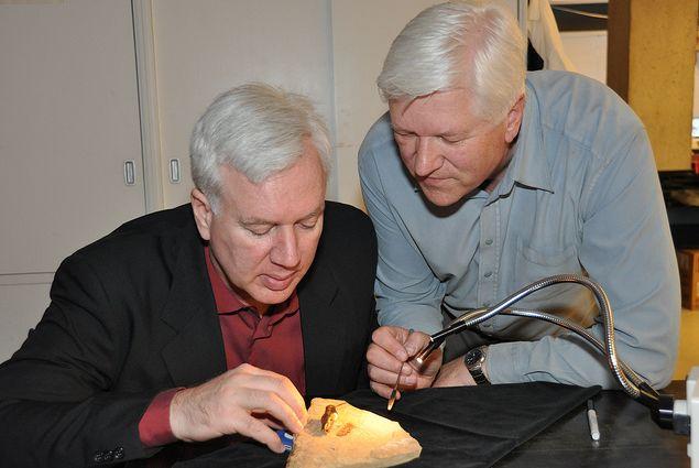 Bruce Archibald und Rolf Mathewes bei der Untersuchung des Fossils (Bruce Archibald / Rolf Mathewes / SFU)
