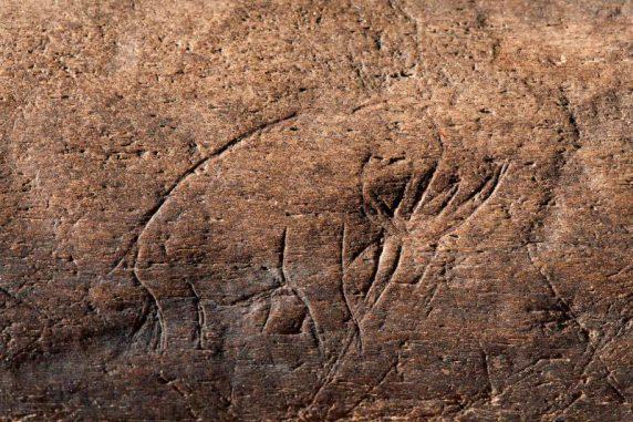 13.000 Jahre alte Schnitzerei auf dem fossilen Tierknochen (Chip Clark)