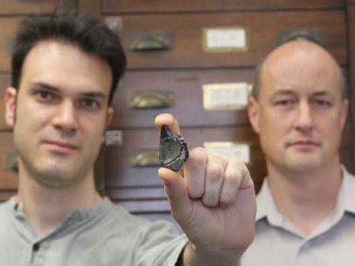 Rob Eagle (links) und John Eiler zeigen den Dinosaurierzahn, der zur Temperaturbestimmung benutzt wurde (Caltech / Lance Hayashida)