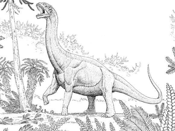 Darstellung eines Sauropoden aus dem Jura (Illustrated by Russell Hawley, Tate Geological Museum)