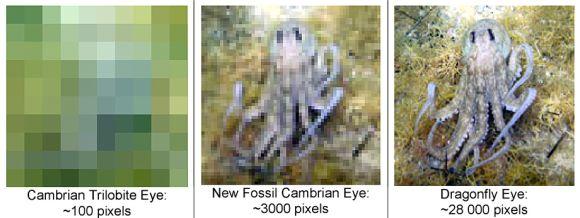 Vergleich der visuellen Auflösung zwischen einem kambrischen Trilobiten (ca. 100 Pixel, links), dem neuen Fossil (ca. 3.000 Pixel, Mitte) und einer Libelle (ca. 28.000 Pixel, rechts) (Thierry Laperousaz / South Australian Museum und Mike Lee / South Australian Museum / University of Adelaide)