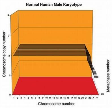 Normaler Karyotyp eines Mannes (P. Duesberg / Univ. Berkeley)