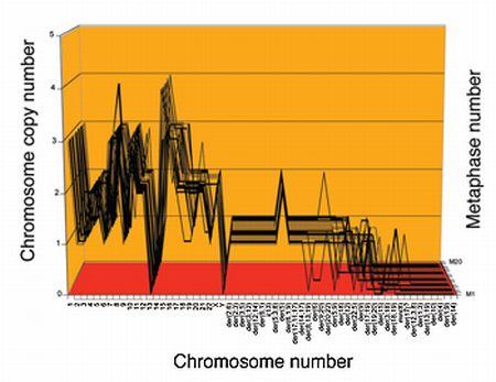 Karyotyp von Gebärmutterhalskrebszellen (P. Duesberg / Univ. Berkeley)