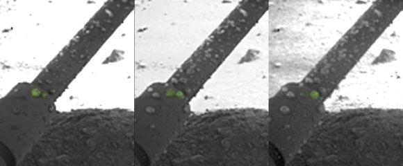 Globulen aus flüssigem Salzwasser auf einem Landebein des Phoenix Landers (NASA / JPL-Caltech / University of Arizona / Max Planck Institute)