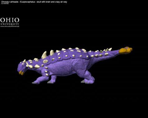 Screenshot des ersten Videos - siehe unten (Witmer Lab / Ohio University)