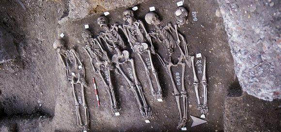 Ein Teil der untersuchten Skelette vom East Smithfield Black Death Cemetery, einem speziell für Pestopfer angelegten Friedhof (Museum of London)