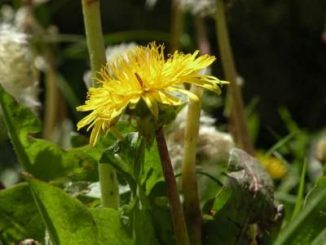 Eine der beiden neu entdeckten Pflanzenarten. (Galán de Mera)