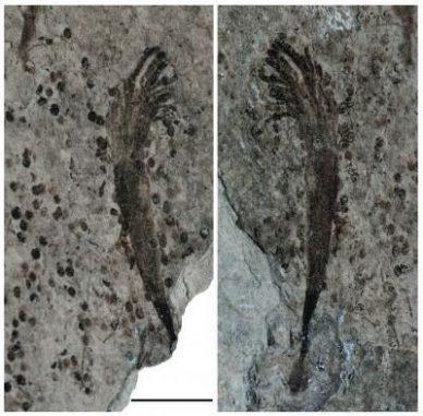 Fossile Überreste. (Photo by Zhe Chen)
