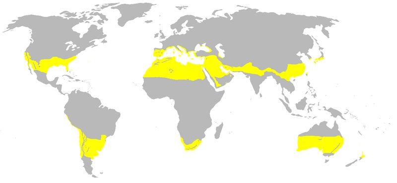 Gebiete mit subtropischem Klima (Bild: © Troll & Paffen)