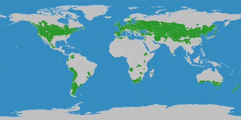 Gebiete mit warmgemäßigtem Klima - Anklicken zum Vergrößern (Bild: ©2007 M.C. Peel / B.L. Finlayson / T.A. McMahon)