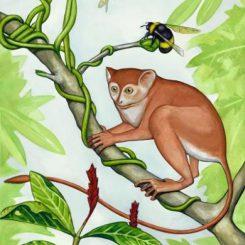 Künstlerische Darstellung des neu entdeckten Primaten Archicebus achilles. (Mat Severson, Northern Illinois University)