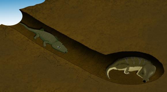 Das Amphibium Broomistega sucht Schutz in der Erdhöhle des säugetierähnlichen Reptils Thrinaxodon. (University of Witwatersrand)
