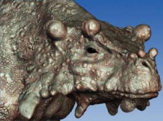 Künstlerische Darstellung des Pareiasaurus Bunostegos, der vor über 250 Millionen Jahren durch die Wüsten Zentralpagäas streifte. (Illustration by Marc Boulay)