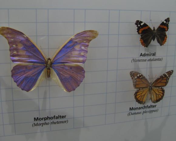Verschiedene Schmetterlingsarten. (astropage.eu mit freundlicher Genehmigung von Dr. Wolfgang Dreyer)