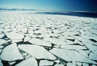 Das arktische Meereis hat weitreichende Auswirkungen auf die Flora und Fauna der Erde. (Photo courtesy of the National Snow and Ice Data Center)