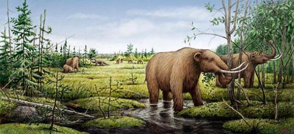 Künstlerische Darstellung von Mastodons, Kamelen und einem Riesenfaultier vor den Klimaveränderungen in der Jüngeren Dryaszeit, die zu ihrem Aussterben führten. (Photo courtesy of Barry Roal Carlsen, University of Wisconsin)