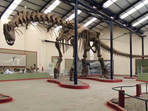 Das Bild zeigt das 40 Meter lange rekonstruierte Skelett des Argentinosaurus huinculensis im Museo Municipal Carmen Funes in Plaza Huincul, Argentinien. (Dr. Bill Sellers, The University of Manchester)