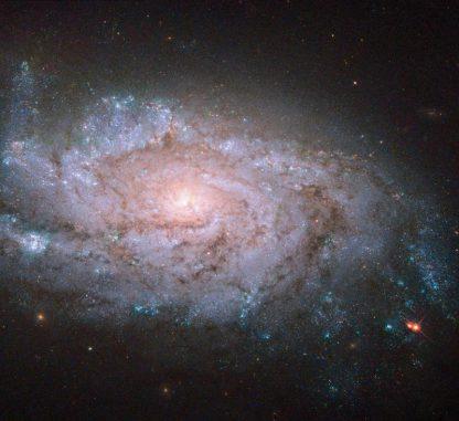 Die Spiralgalaxie NGC 1084, aufgenommen vom Weltraumteleskop Hubble. In der Galaxie konnten bisher fünf Supernova-Explosionen registriert werden. (NASA, ESA, and S. Smartt (Queens University Belfast); Acknowledgement: Brian Campbell)