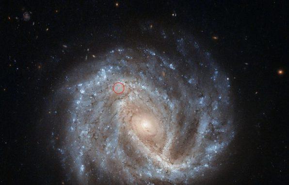 Die Spiralgalaxie NGC 2441 im Sternbild Camelopardalis. Die Supernova SN 1995E ist mit einem roten Kreis markiert. (ESA / Hubble & NASA; Acknowledgement: Nick Rose)
