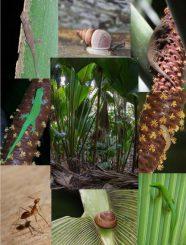 Verschiedene Tierarten, die im Palmenwald auf den Seychellen heimisch sind. (C. Kaiser-Bunbury / Pensoft Publishers / CC BY 4.0)
