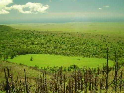 Landschaft auf den Galapagos-Inseln. (Pensoft / CC BY 4.0)