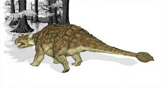 Künstlerische Darstellung des namensgebenden Ankylosaurus. (Mariana Ruiz Villarreal/ Public Domain)
