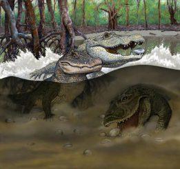 Diese Illustration zeigt die Sümpfe der Mega-Feuchtgebiete in der Region des heutigen Amazonasbeckens im späten Mittleren Miozän vor rund 13 Millionen Jahren. Zu sehen sind die drei neuen Korokodilarten, deren Fossilien im Nordosten des heutigen Peru entdeckt wurden: Kuttanacaiman iquitosensis (links), Caiman wannlangstoni (rechts) und Gnatusuchus pebasensis (unten). (Copyright Javier Herbozo / AMNH)