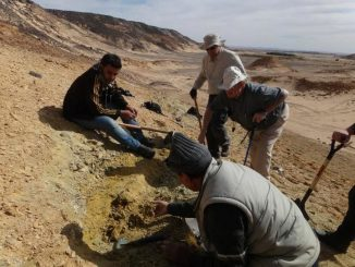 Das Team der University of Kansas bei der Freilegung von Fossilien in Libyen. (Yaowalak Chaimanee, University of Poitiers, France)