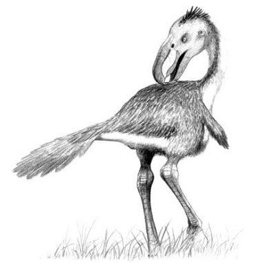 Künstlerische Darstellung eines Terrorvogels, der zur selben Tiergruppe wie die neu entdeckte Spezies gehört. (Wikipedia / John Conway, CC BY-SA 3.0)
