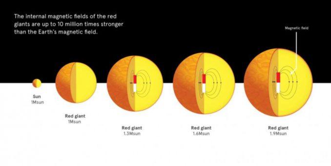Sterne wie die Sonne blähen sich am Ende ihres Lebens auf und werden zu Roten Riesen. Rote Riesen mit 1,5-2 Sonnenmassen verfügen häufig über starke innere Magnetfelder. (University of Sydney)