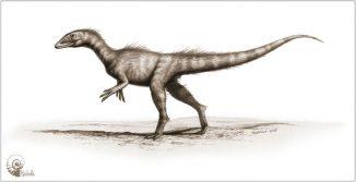 Illustration des neu beschriebenen Dinosauriers Dracoraptor hanigani. (Artwork by Bob Nichols (paleocreations.com), CC-BY-3.0)