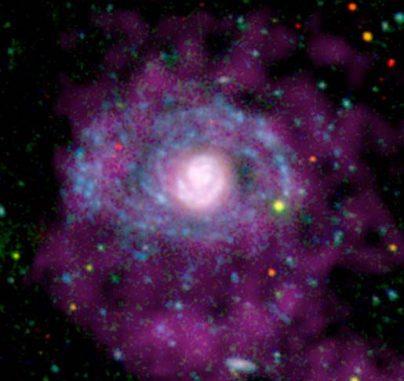 Sternentstehungsprozesse in den Außenbereichen der Spiralgalaxie NGC 4625 sind hier in ultraviolettem Licht (blau gekennzeichnet) zu sehen. In optischem Licht (rot) sind diese Arme nahezu unsichtbar, aber dort gibt es junge, heiße Sterne, die ultraviolette Strahlung abgeben. Das atomare Gas wird mit Radiowellenlängen (violett) registriert. (NASA / JPL-Caltech / Carnegie Observatories / WSRT)