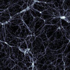Ein Bild aus dem würfelförmigen Raumsegment, das im Rahmen des Illustris-Projekts simuliert wird. Es zeigt die Verteilung der Dunklen Materie. Die Galaxien befinden sich in den kleinen, weißen Knoten mit hoher Dichte. (Markus Haider/ Illustris collaboration)