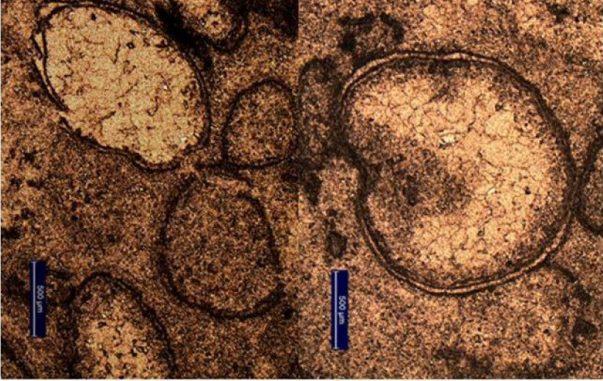 Spherulen in einem Bohrkern aus Marble Bar im Nordwesten Australiens deuten auf einen großen Asteroideneinschlag in der Frühzeit der Erde hin. (Image: A. Glikson)