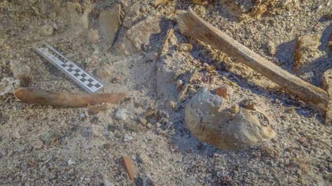 Skelettüberreste an Ort und Stelle am Schiffswrack von Antikythera. Es handelt sich um einen Schädel und Langknochen von Arm und Bein. (Photo by Brett Seymour, EUA / WHOI / ARGO)