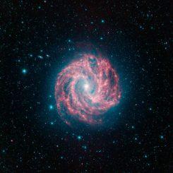 Die Südliche Feuerrad-Galaxie NGC 5236, aufgenommen im Infrarotbereich vom Spitzer-Weltraumteleskop (NASA / JPL-Caltech)