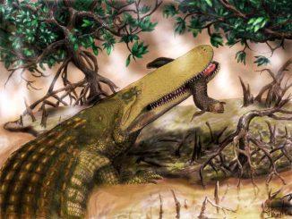 """Künstlerische Darstellung von """"Shieldcroc"""" bei der Jagd (Henry P. Tsai / University of Missouri)"""