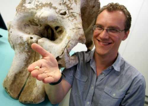 Dr. Alistair Evans mit einem Elefantenschädel im Hintergrund und dem Schädel einer Maus in der Hand (Monash University)