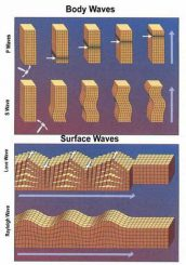 Verschiedene Typen seismischer Wellen (USGS)