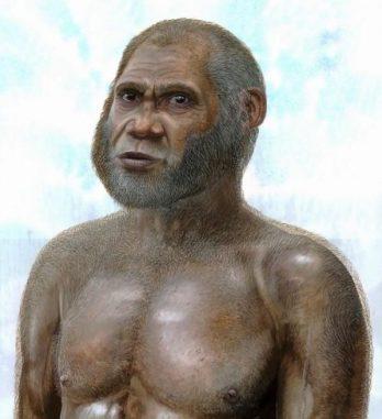 Künstlerische Darstellung, basierend auf den Fossilien. (Copyright Peter Schouten)