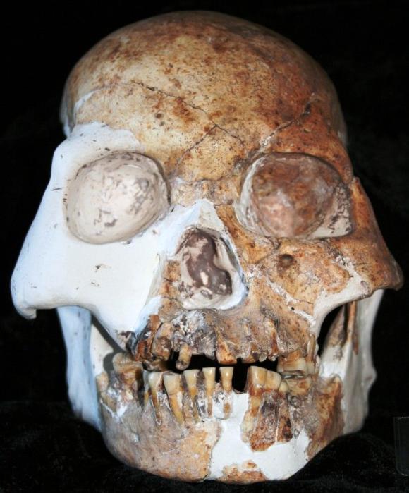 "Schädel eines ""Rotwild-Menschen"" (""Red Deer People"") aus Longlin. (University of New South Wales)"