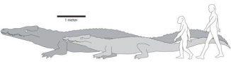 Größenvergleich zwischen einem heutigen Krokodil und der neuen Krokodilart, sowie den damaligen und heutigen Menschen. (Illustration by Chris Brochu)