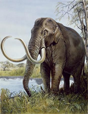 Das Zwergmammut Mammuthus creticus könnte wie die Miniaturausgabe dieses richtigen Mammuts ausgesehen haben. (Natural History Museum)