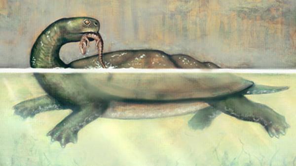 Rekonstruktion von Carbonemys cofrinii bei der Jagd. (NC State University / Artwork by Liz Bradford)